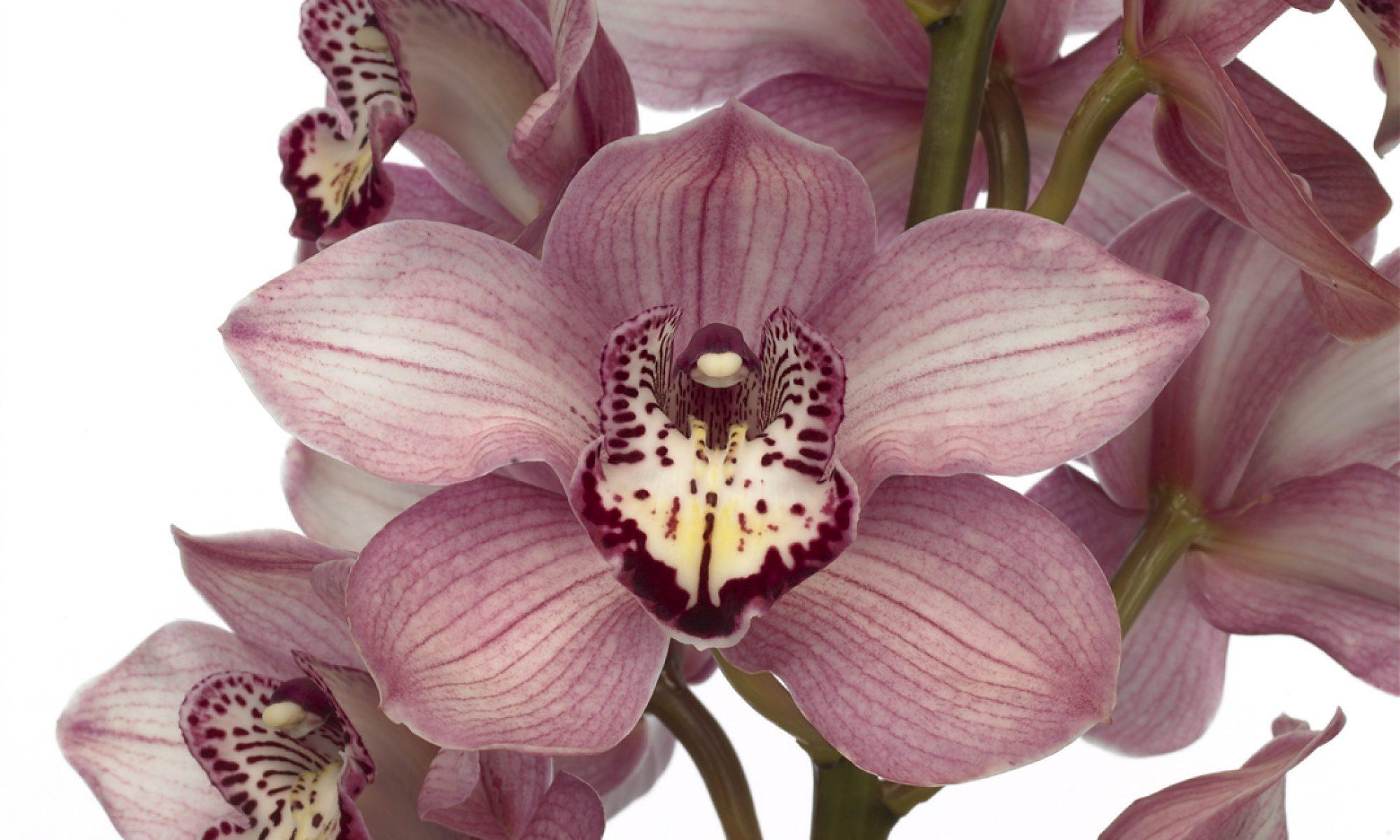 Bosch Orchids